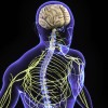 central nervous system, Todays Practitioner