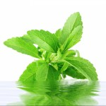 stevia metabolic syndrome