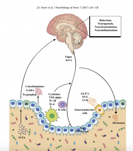 Microbiota on Mood and Mental Health, neurobiology of stress
